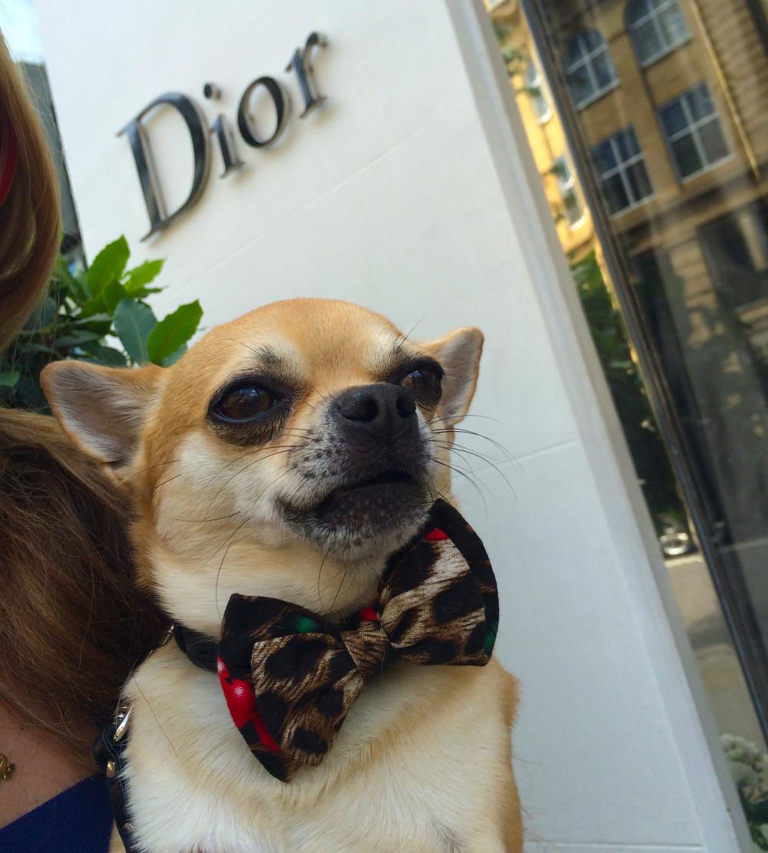 Chilliwawa Stylish Dog at Dior
