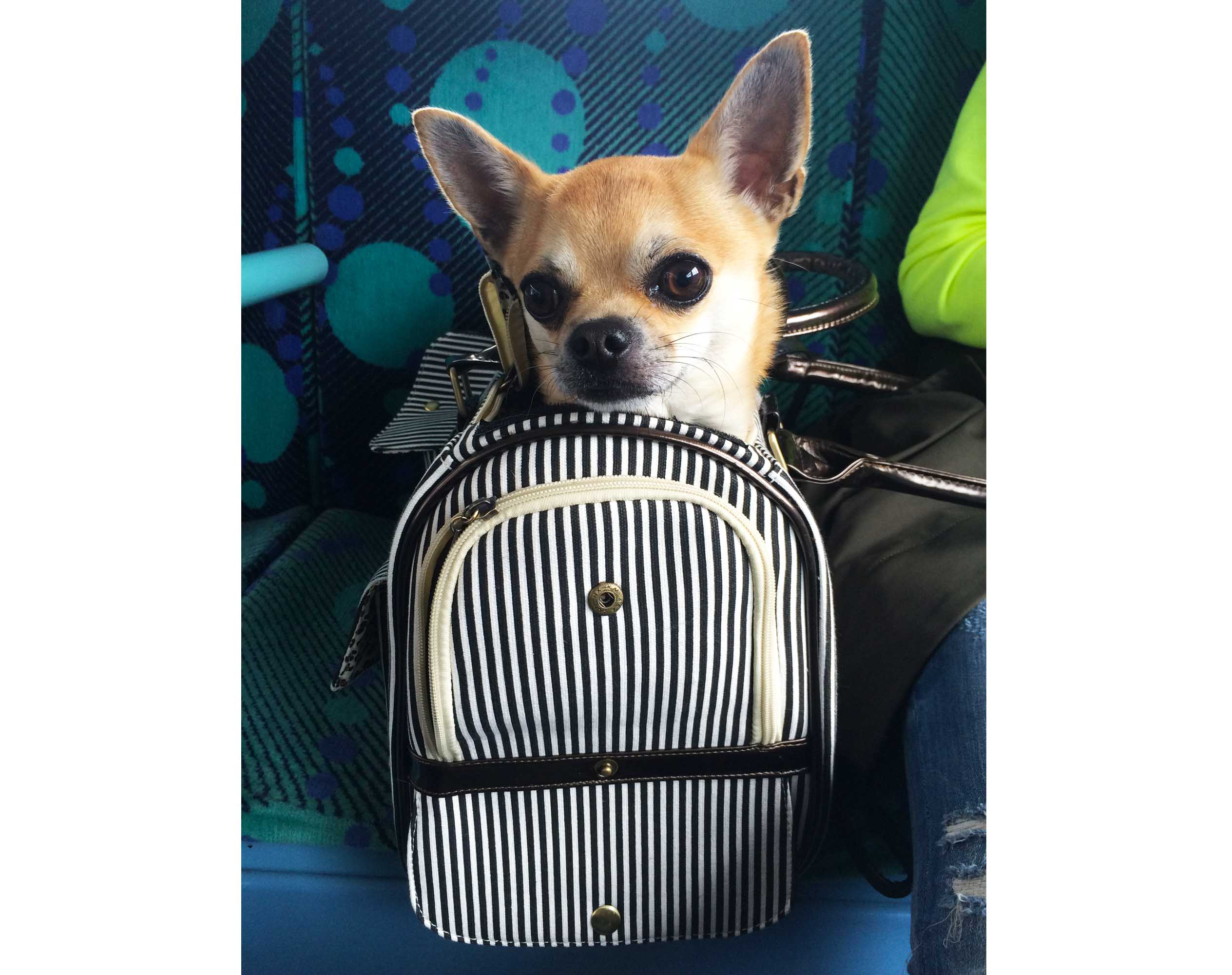 Dog Blog Update: My New Bag