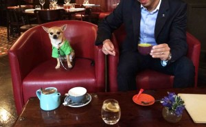 Chilliwawa dog blog having a coffee