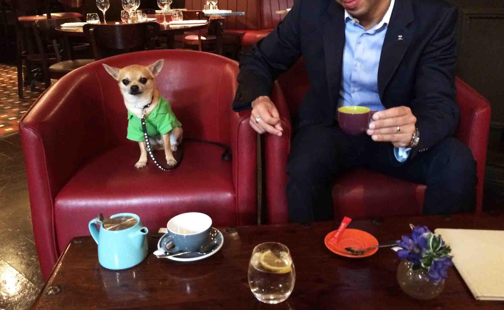 Dog blog with a job: coffee time!