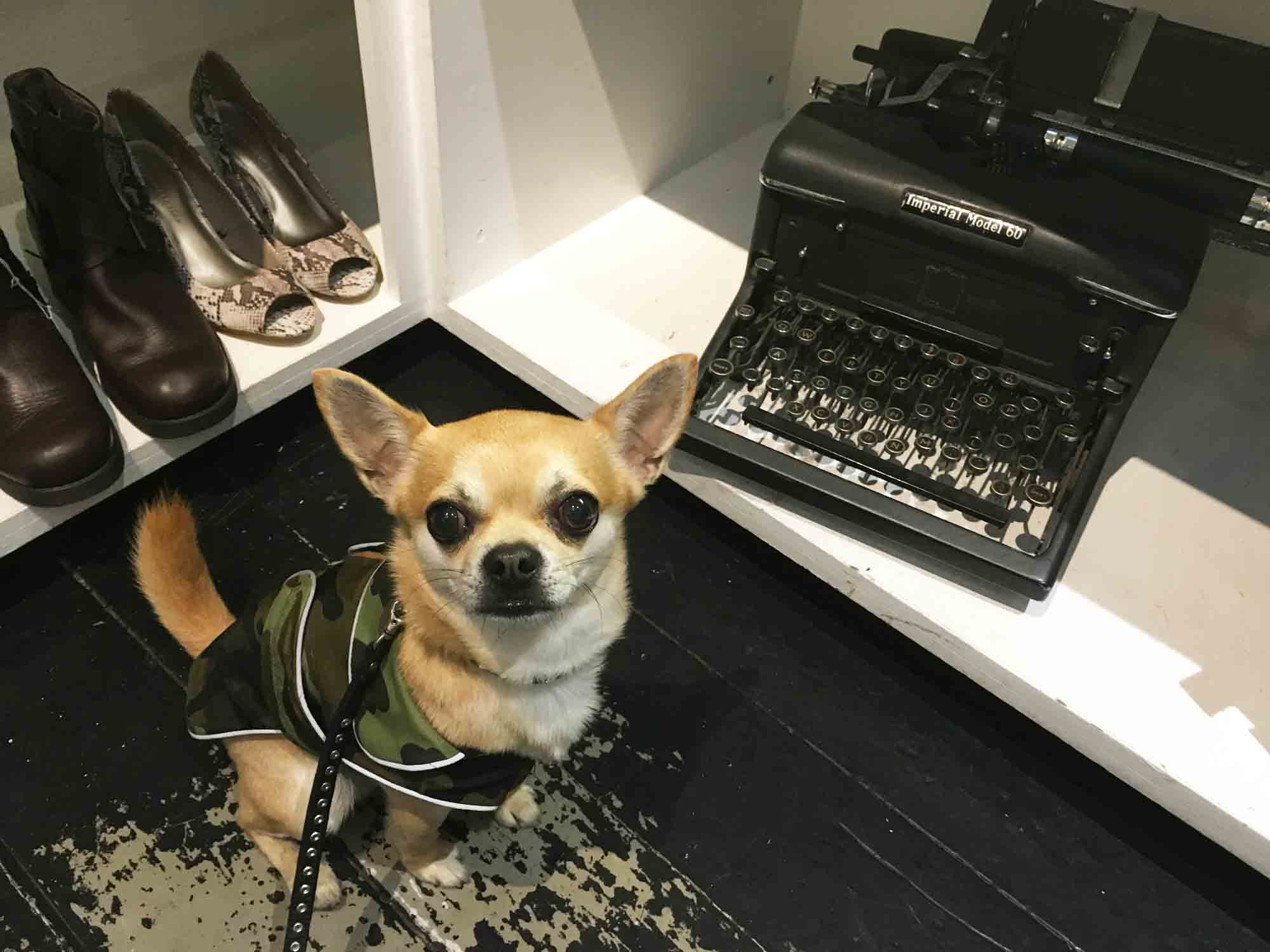 Chilliwawa with a typewriter