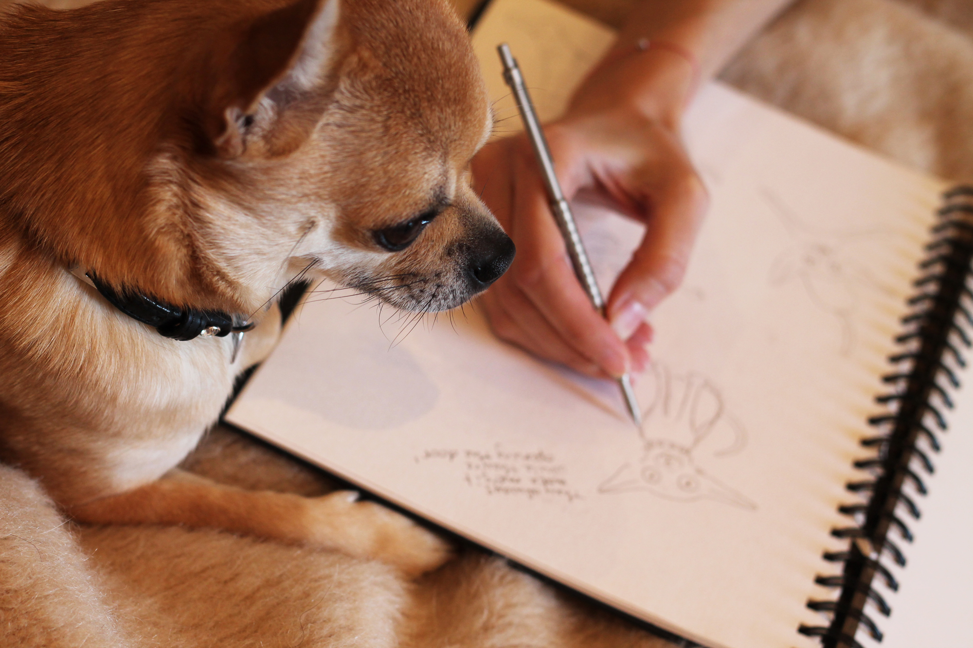 Dog Blog Illustrations!