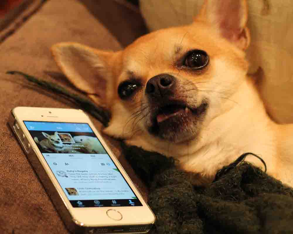 #twitterdown even for Dog Blog!