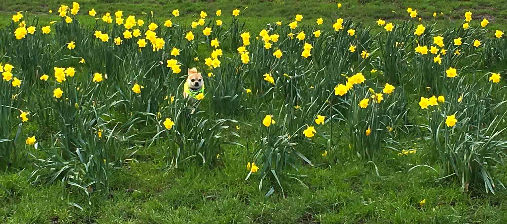 Dog Blog Game: Can you see me?