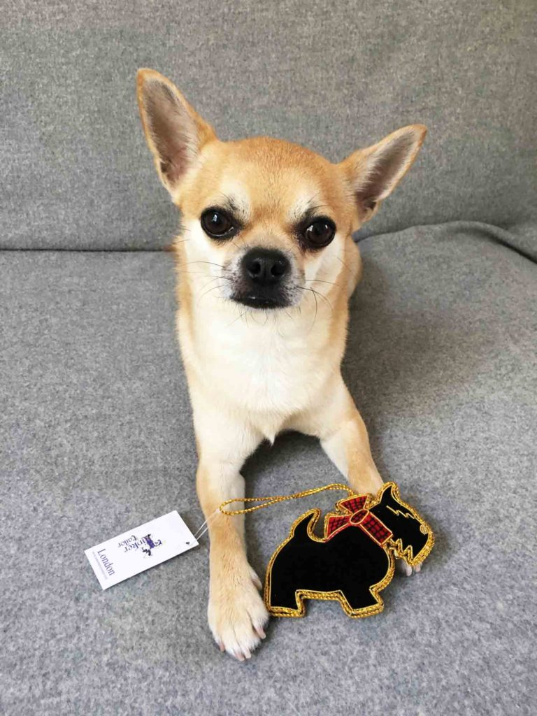 Chilli with luxe velvet dog Christmas ornament