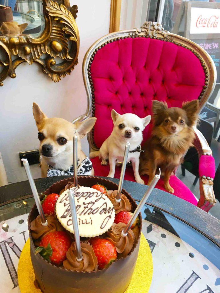 Chilli dog birthday party