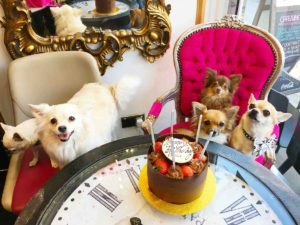 Dog birthday party at Verve London