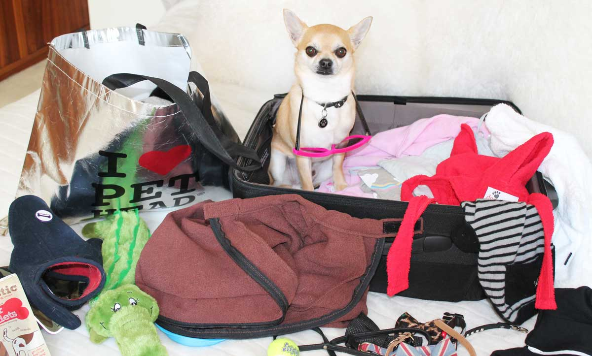 Packing a Doggie Suitcase Chihuahua Style!
