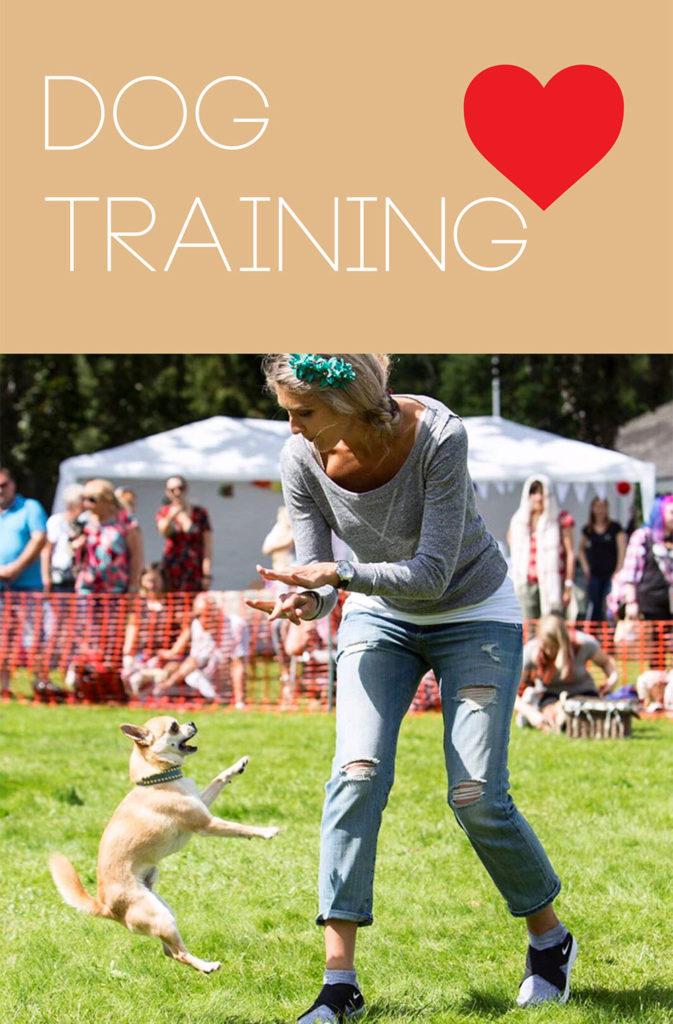 All about dog training