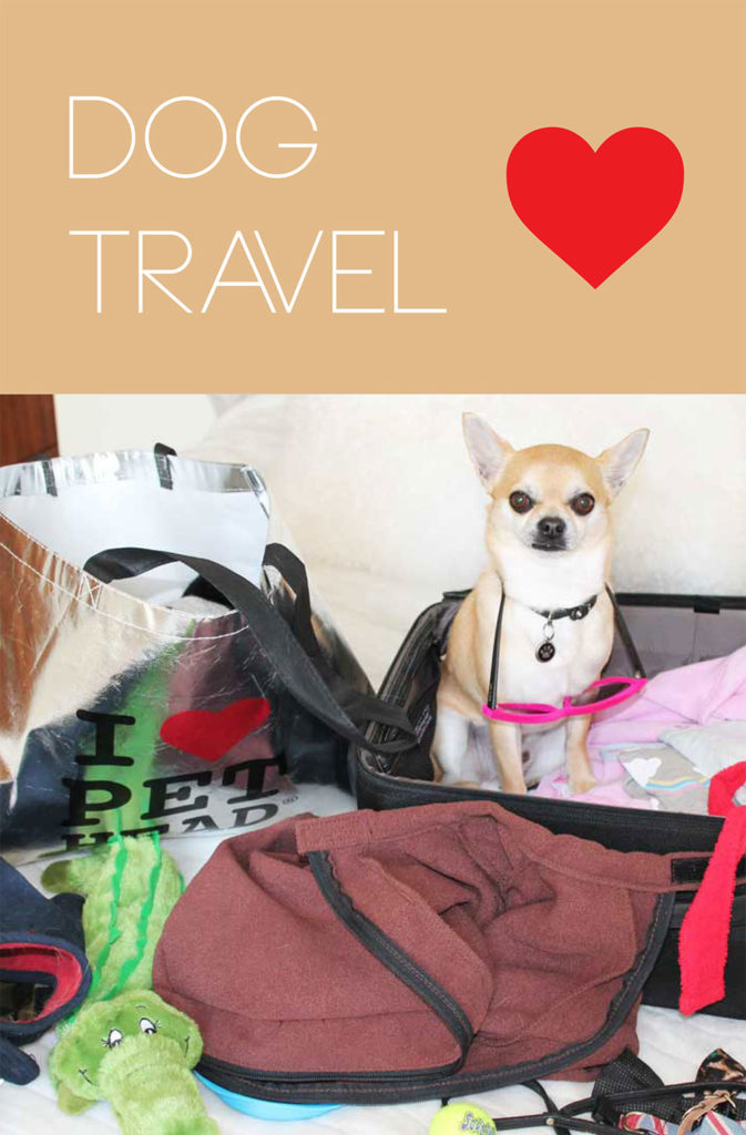 All about travelling with your dog