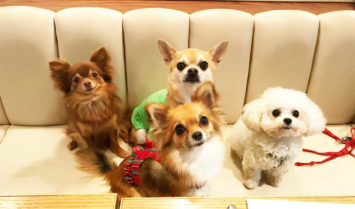 Chilli Chihuahua with his friends in a restaurant