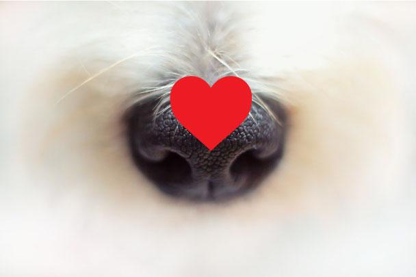 Dog theft – How to keep your beloved dog safe!