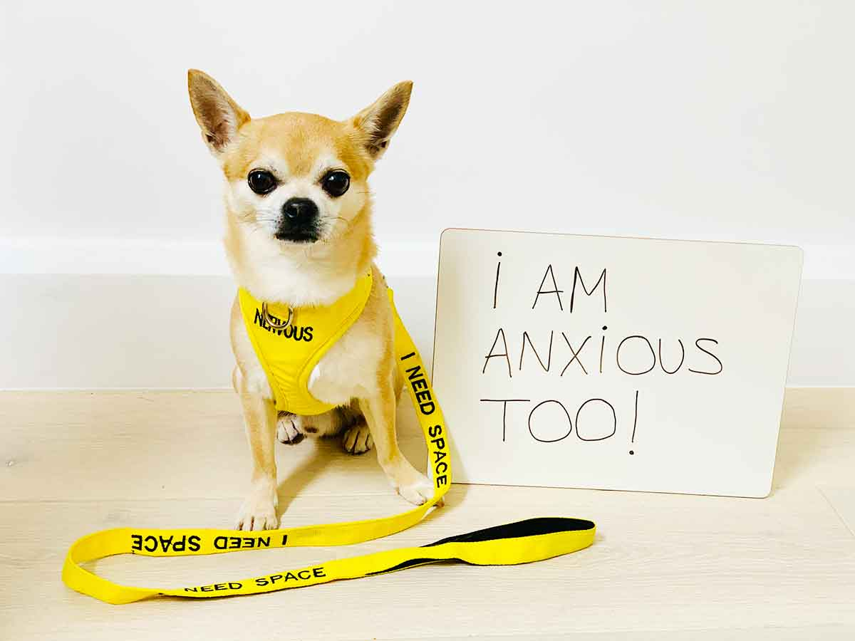 dogs have anxiety too